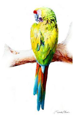 Military Macaw - Michelle Bush