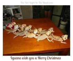 Iguana wish you a Merry Christmas.
