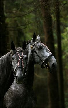 ♂ Wild life photography #black #animals #horses