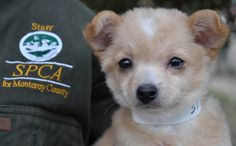 Learn more about your SPCA for Monterey County: www.SPCAmc.org.