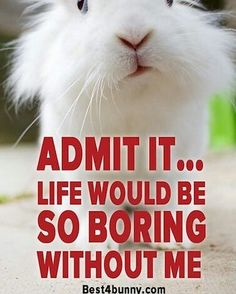 Ok you got us! #bunny #bunnies #rabbit #cuteanimals #pets