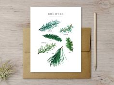 "Original illustrations of different types of evergreen needles printed on quality cardstock. A great card for the holidays! CARD: A2 (folded 4.25"" x 5.5""), blank inside ENVELOPE: Fine Kraft Paper Enve"