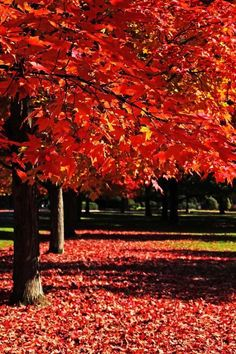 Spokane Washington, City, Plants, Beautiful, Cities, Plant, Planets