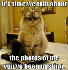 kittens pretending - Yahoo Search Results