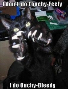 angry cat, funny pictures  i dont do touchy-feely...  i do ouchy-bleedy