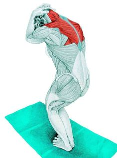 So what kind of muscles do you stretch when you do yoga? Look at these stretching exercises with pictures do find out - Vicky Tomin is a Yoga exercise Yoga Zen, Yoga Meditation, Scoliosis Exercises, Stretching Exercises, Yoga Sequences, Yoga Poses, Muscle Stretches, Yoga Anatomy, Kundalini Yoga