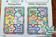 Photosynthesis vs Cellular Respiration by Common Core Materials