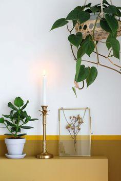 intenz home fensterbl tter monstera 39 monkey mask 39 pflanzen im und ums haus pinterest. Black Bedroom Furniture Sets. Home Design Ideas