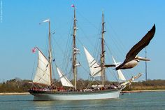 Share the adventure of the high seas at the Texas Seaport Museum, home of the celebrated 1877 tall ship Elissa. Located in the historic port of Galveston, the Texas Seaport Museum also tells the story of a rich legacy of seaborne commerce and immigration. Look for ancestors with a one-of-a-kind computer database containing the names of more than 133,000 immigrants who entered the United States through Galveston.
