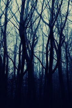 Trees by Benedict  Brain