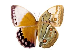 These Butterfly Wings Are Beautiful for a Reason – PROOF