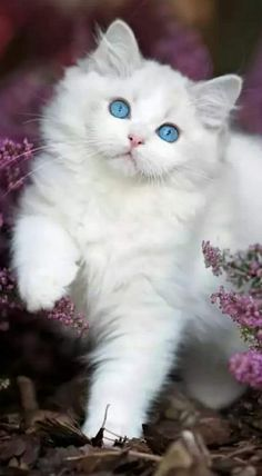 BEAUTIFUL!..and fluffy!