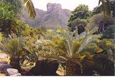 Kbosch - cycads by Alhazred, via Flickr