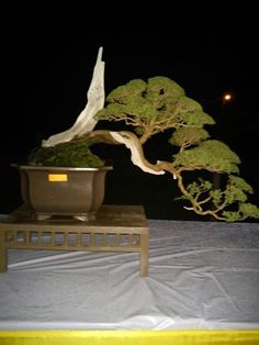 I really love bonsai trees they a beautiful. Please check out my website thanks. www.photopix.co.nz