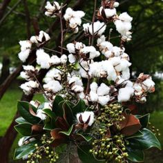 floral arrangements with cotton | Can't get more southern than cotton and magnolias..texture, green and ...