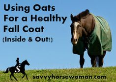 The horse care products I love the most all have three things in common; affordable, natural, and good for my horses, inside and out. This makes oats an easy favorite! I use oats for daily… Horse Hay, Horse Feed, My Horse, Homemade Horse Treats, Horse Braiding, Horse Care Tips, All About Horses, Horse Farms