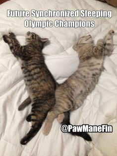 Future Synchronized Sleeping Olympic Champions #cats   #lolcatsimages
