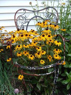 Just a awesome thought....old chair turned into container for beautiful Black Eyed Susans. Love this!!