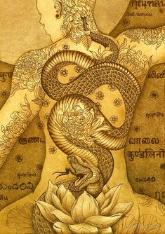 (disambiguation) Kundalini is a spiritual energy in yogic philosophy. Kundalini may also refer to: Yoga Kundalini, Chakra Meditation, Tatouage Kundalini, Kundalini Tattoo, Chakra Tattoo, Yoga Kunst, Tantra Art, Dragon Rise, Esoteric Art