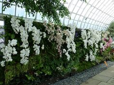 Orchid Show - Vertical Garden Wall 1 - Cane Orchids