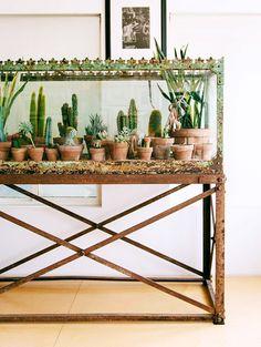 cacti collection / sfgirlbybay