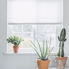 Brighten up your windows with some sculptural cacti and clean, cordless shades.  Photo via @abigailmarygreen  #shades #windowshades #windowcoverings #cactus #windowsill #cordless #blinds #window #windowlove
