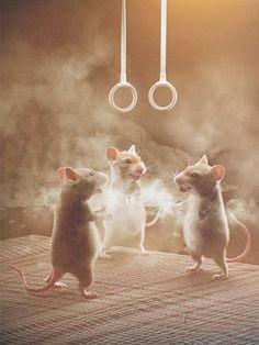 Eine Turnübung, gymnastic exercise #cute animals, #mice, #mouse, illustration