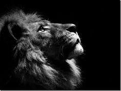 Resultado de imagem para textos leão de judá