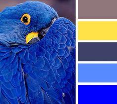Color Schemes Colour Palettes, Colour Pallette, Color Combos, Orange Color Schemes, Crazy Colour, Color Pop, Color Balance, Deco Design, Coordinating Colors