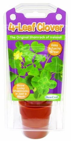Dunecraft 4-Leaf Clover Science Kit (810017011278) Seed and Plant Kit Plants and Soil 4-Leaf Clover Hydroponics