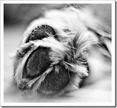 7 cuidados que você deve ter com as patas do seu cachorro