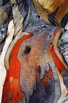 Texture and pattern: tree bark. Beautiful Tree, Beautiful Textures, Texture Inspiration, Abstract Photography, Patterns In Nature, Color Textures, Natural Texture, Art, Texture Art