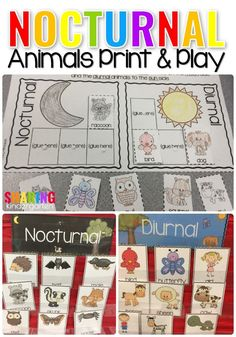 Nocturnal Print & Play Pack- Fun Science activities to use in your Kindergarten, Preschool and First Grade Classrooms! Preschool Themes, Preschool Science, Science Experiments Kids, Science Fun, Science Chemistry, Preschool Learning, Science Lessons, Animal Science, Animal Activities