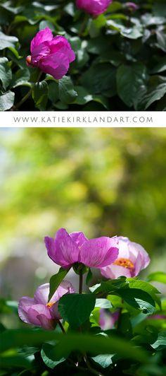 """Woodland Peony"" and ""Pink Peony"" art prints - Click through to shop."