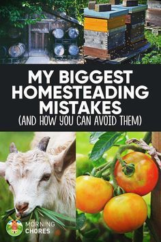 8 Dreadful Mistakes I Made When Creating My Dream Homestead (and How to Avoid…