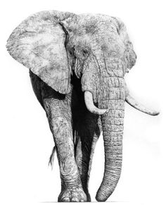 Majestic Thunder - Jamie Boots Graphite pencil artist, who often runs successful art courses at Nature in Art. #art #nature #elephant