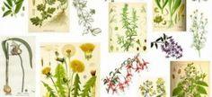 En Orden Alfabetico, Se Presentan 230 Plantas Medicinales