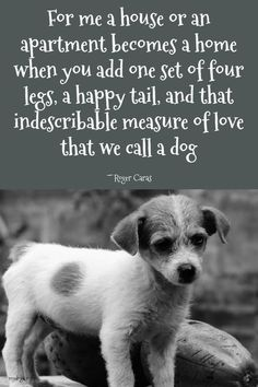Remarkable Dog Training Tips For The Average Joe Ideas. Awesome Dog Training Tips For The Average Joe Ideas. Best Dog Quotes, Dog Quotes Love, Dog Quotes Funny, Funny Dogs, Pet Quotes, Sassy Quotes, Puppy Care, Dog Care, I Love Dogs