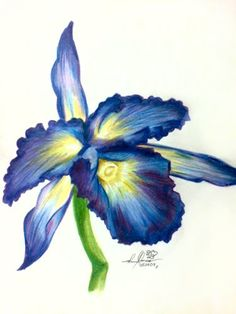 Flower Orchid Colored Pencil Drawing Of Blue Purple Bloom