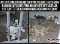 Ohana Dog_Blog: APPELLO: adozione cani detenuti nel canile lager S...