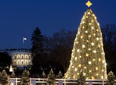national Christmas tree with the Yule log nearby