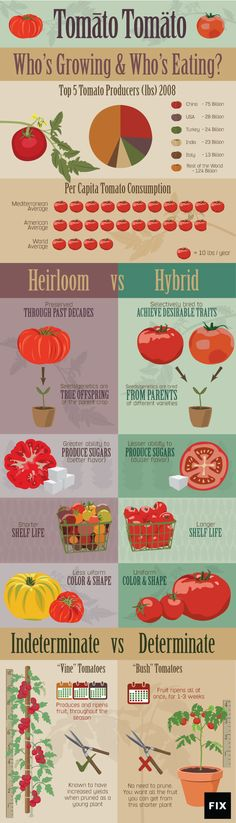 Americans consume 100 pounds of Tomatoes every year on average. But which tomato is the best for your garden, hybrids or heirlooms?
