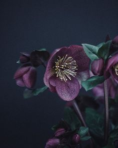 Heavenly hellebores one of my absolute favourite flowers at this time of year! . In other news Ive recently been finding my way around the @over app and using it to add text to my Instagram Stories. Many thanks to Carrie at @wishwishwish for the tip-off! Her Instagram Stories are absolutely sublime in a class of their own...so do take a look. . Id love to know whose Instagram Stories are you loving at the moment?