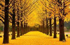 Wisata Korea Selatan  Pulau Jeju  Favorite Places \u0026 Spaces  Pinterest  Korea