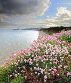 Flowers in Dawlish, Devon, England