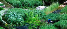 Biointenzive Garden - Biointenzivní zahrada