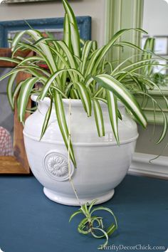 How to keep cats from eating houseplants post on safe indoor plants for spider plant stop . cat friendly houseplants for cats Cat Safe Plants, Cat Plants, Garden Plants, Live Plants, Artificial Indoor Plants, Indoor Plants Low Light, Plants Indoor, Container Plants, Container Gardening