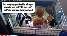 Lolcats n' Funny Cat Pictures
