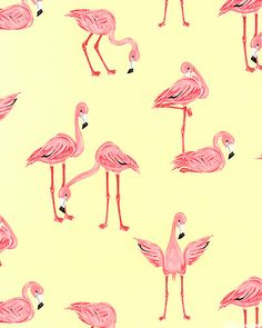 Flamingos - Pineapple $10.95
