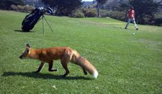 I love #golf because I'm out in Nature. I'm always so grateful when I see wildlife!